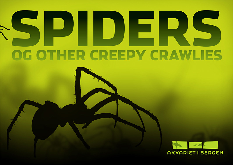 Spiders and other Creepy Crawlies